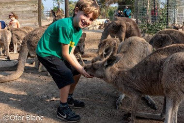 גן גורו הוא פארק אוסטרלי ייחודי ובו בעלי חיים וצמחייה מאוסטרליה הרחוקה - לגדול