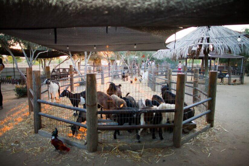 גן גורים בגני יהודה, פעילויות לילדים בפסח 2021 - לגדול