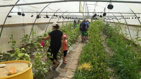 חוויה בגבעה, קטיף תותים, פעילות משפחתית