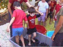 חויה חקלאית-אטרקציה לילדים במזכרת בתיה