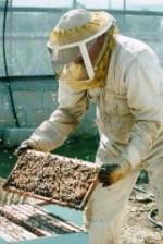 דבורת התבור, מצפה דבורים, אתר לגדול אתר המשפחות של ישראל