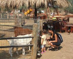 גן גורים-פינות חי לילדים במרכז הארץ