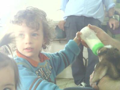 החווה של חווה, אטרקציות לילדים