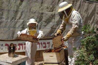 דבורת התבור, מכוורות דבש, אתר לגדול אתר המשפחות של ישראל