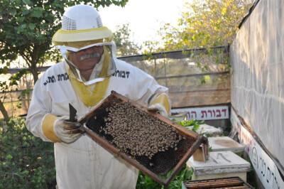 דבורת התבור-מקום בילוי לילדים בצפון, אתר לגדול אתר המשפחות של ישראל