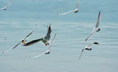 תיירות עין גב ציפורים