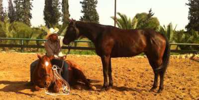 חוות המאלף מפגש עם סוסים- אתר לגדול