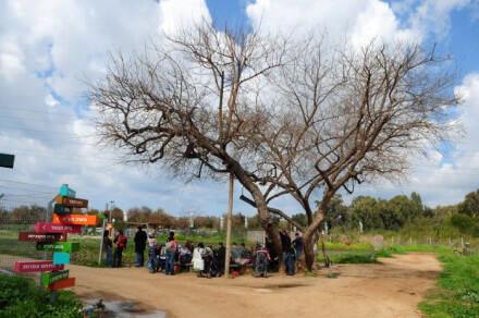 פעילות קבוצות בחווה תל אביב