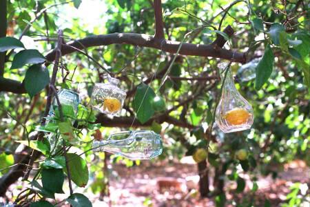 עץ הבקבוקים