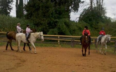 חוות סוסי אדמה