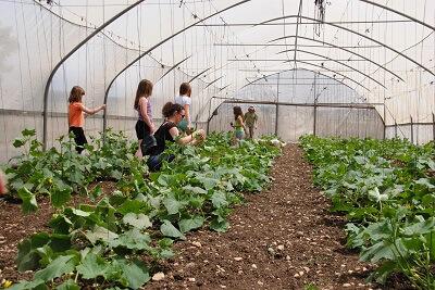 קטופותי אטרקציה לילדים בבית לחם הגלילית בצפון הארץ, קוטפים קישואים בחממה מקורה ולומדים את רזי החקלאות