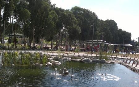 פארק רמת השרון בריכת דגים