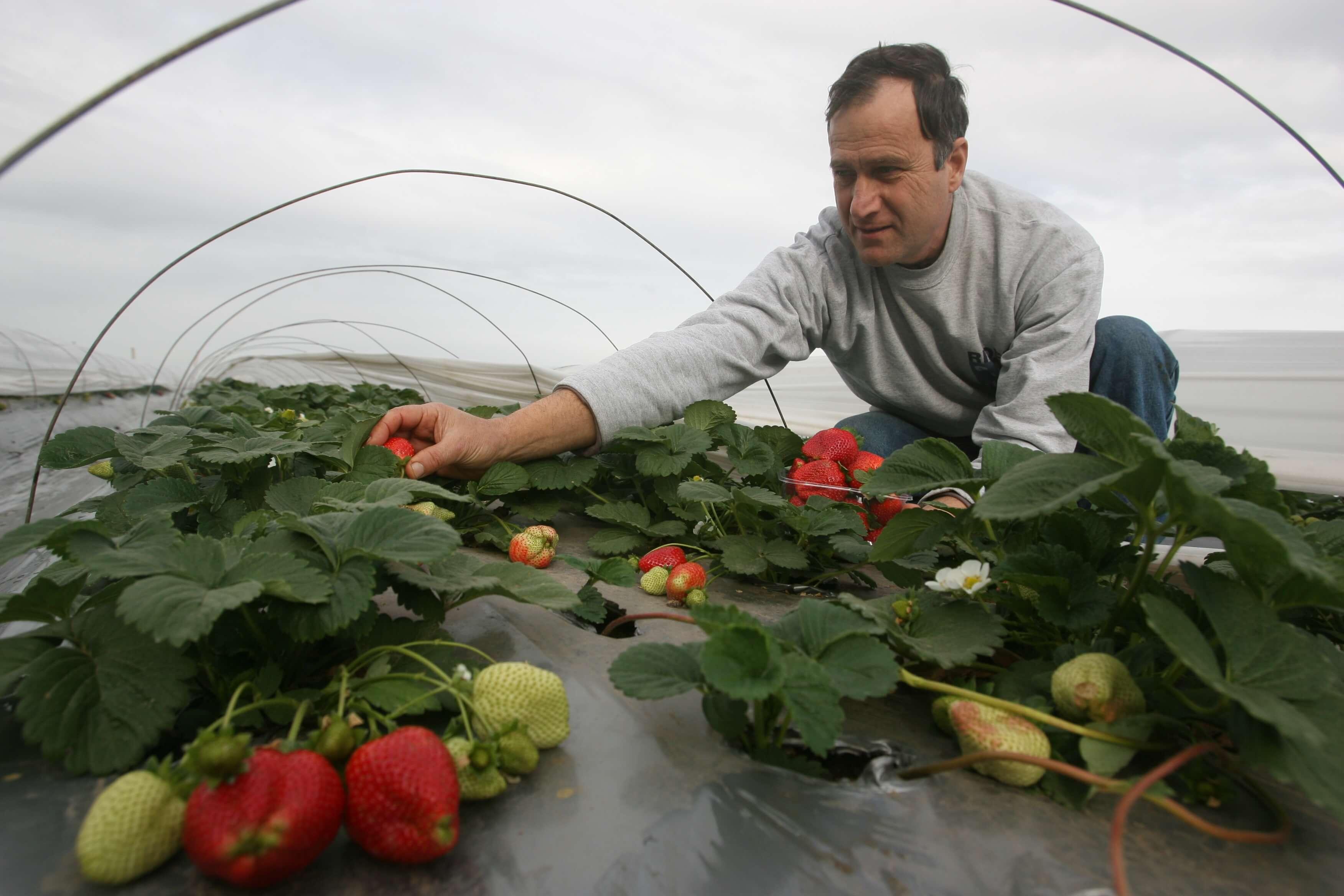 תות ברמת השרון