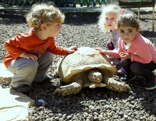 אגם חי יראון, בילוי עם הילדים,