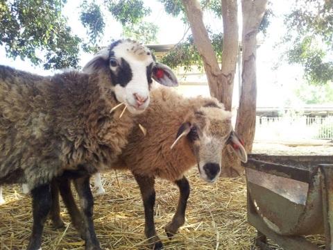 פינת חי בחווה תל אביב