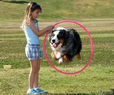 דוגלנד - מופע כלבים וסיור למשפחות וילדים - לגדול