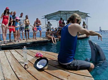 אטרקציות לילדים, ריף הדולפינים, אתר לגדול