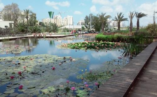 גן בעברית ראשון לציון בריכה אקולוגית