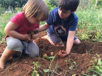 גינת אוכל פעילות לילדים בביתן אהרון משק הלברכט