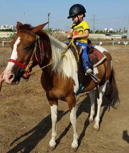 חוות סוסים הדר ראשון לציון