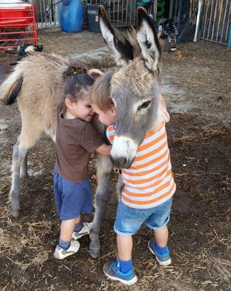 חוות הדר, רכיבה על סוסים, האכלת חיות ועוד פעילויות לילדים- אתר לגדול