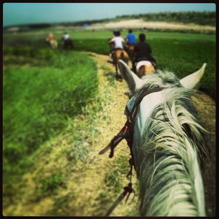 חוות המאלף טיולי סוסים