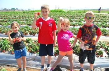 משק 6, קטיף תותים, פינות חי, רכיסב על פוני ועוד, לגדול