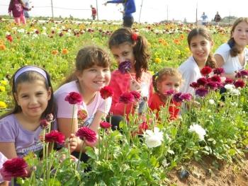 משק 6- קטיף תותים בשבת - אתר לגדול